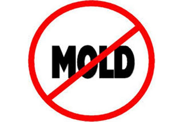 mold-300